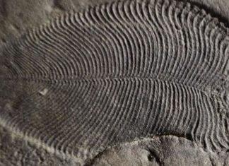 En eski hayvan fosili