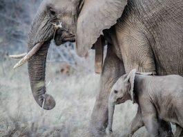 Fillerin ilginç özellikleri