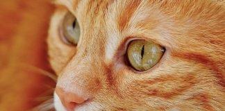 Kedi yaşı nasıl hesaplanır