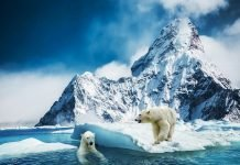 Kutupta yaşayan hayvanlar