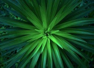 bitkiler nasıl nefes alır