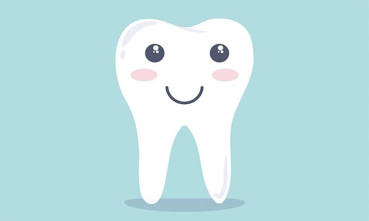 dişler hakkında bilgiler