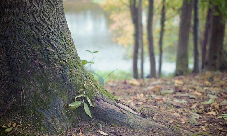 Ağaç hakkında