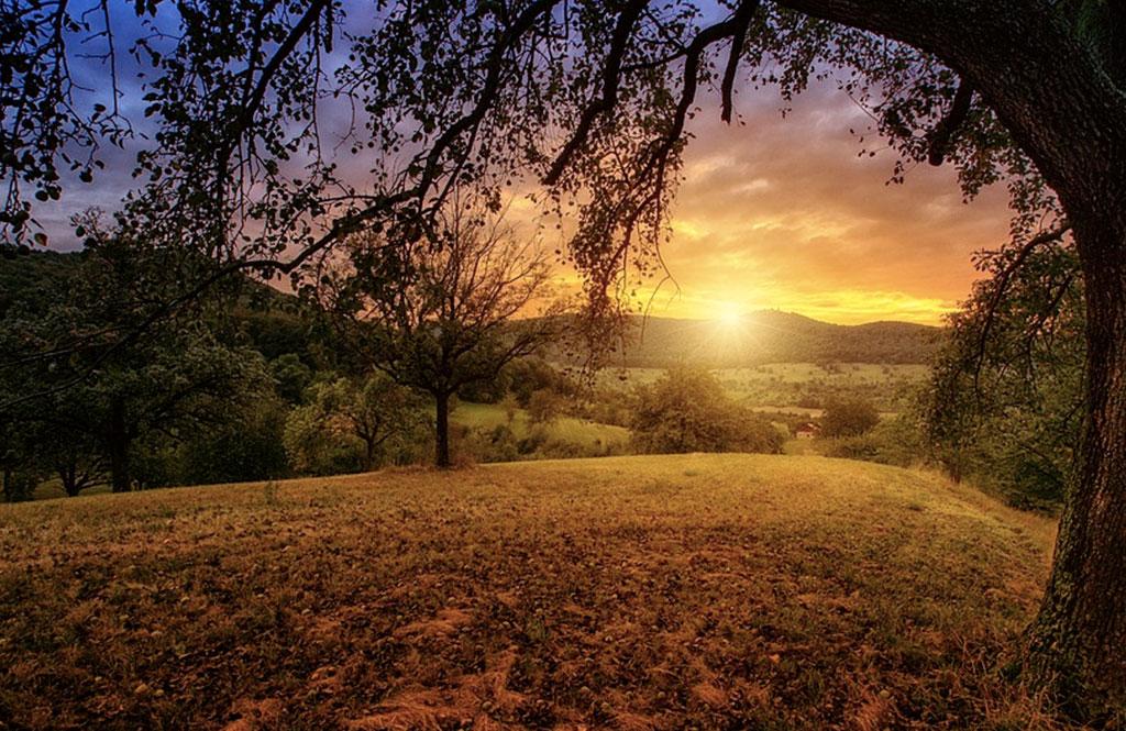 güneşin canlılar için önemi