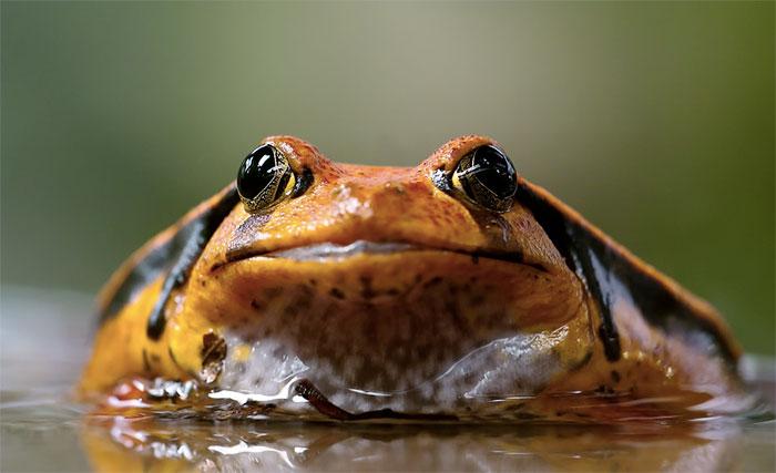 kurbağalar hakkında